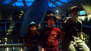 The big whale at AMNH.